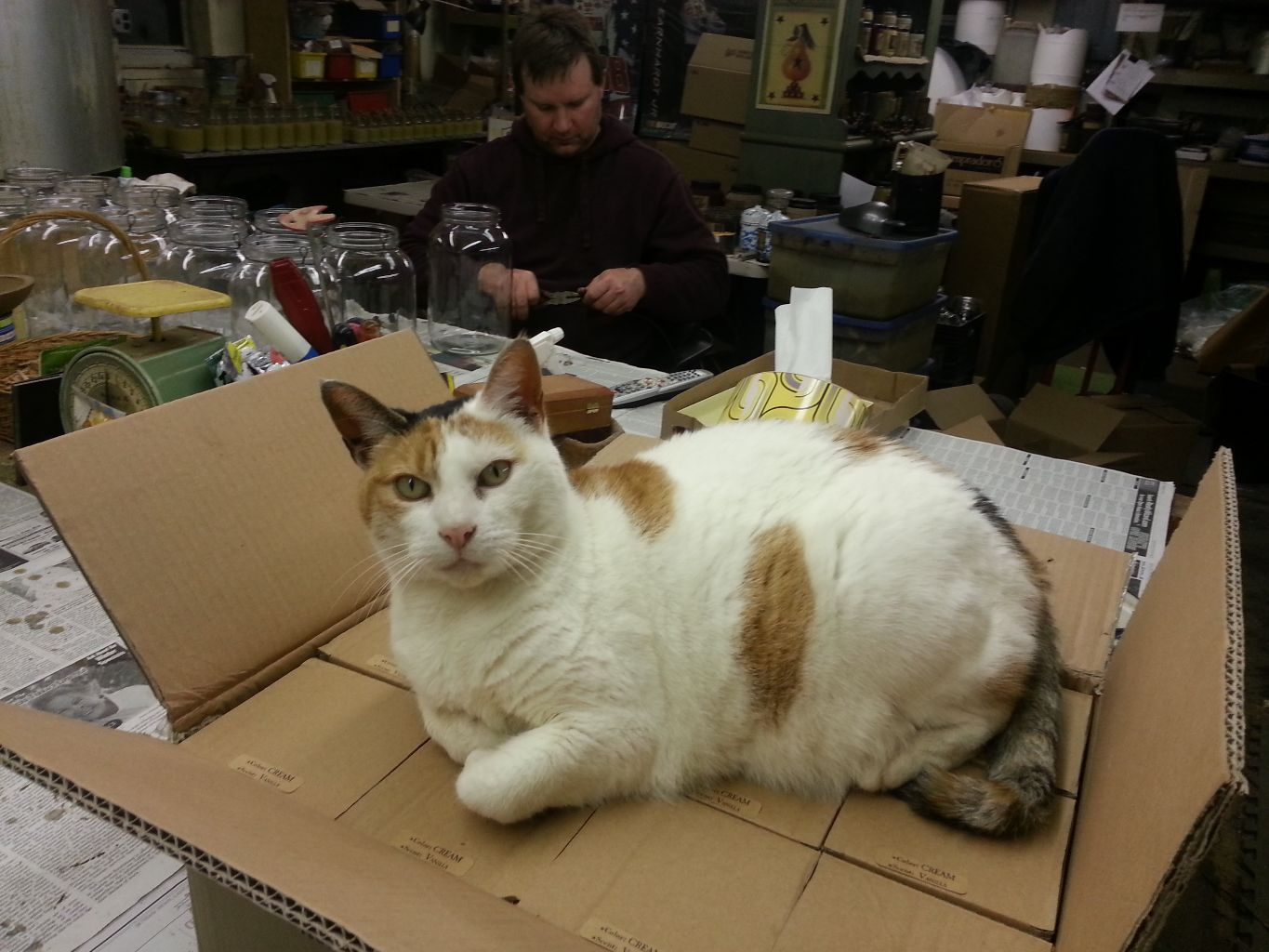 Peaches our shop cat